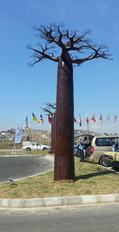les baobabs representent de la grandeur pour Les Malgaches
